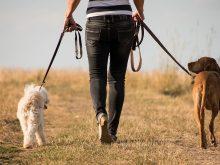 Podatek od psa w 2021 roku. Szykują się podwyżki?