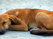 Ile kosztuje utrzymanie psa?